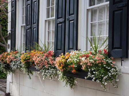 Southern Living_Window Box Planters