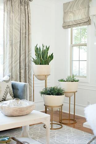 Corner-Houseplant-Grouping1